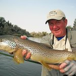 "24"" brown trout on the Big Horn River."