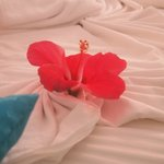 Flower on the bed!
