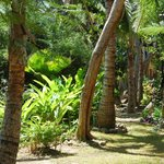 Grounds of  Wellesley Palms