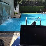 Poolside office