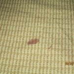 Blood? on bedspread