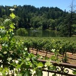 Sherwin Family Vineyards