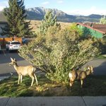 elk outside our front door