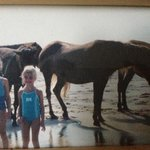 Φωτογραφία: Assateague State Park Camping