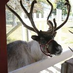Hardy's Reindeer Ranch