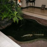 Beautiful Fish Pond