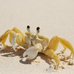 Even the tiny crabs are friendly