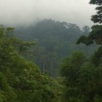 View of the misty jungle