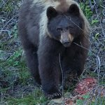 Our guide took us to this carcass where we found bear feeding on several occasions