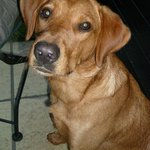 Foto di The Lion Inn