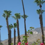 Φωτογραφία: Travelodge Palm Springs