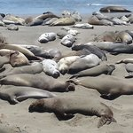 nearby activity - elephant seals