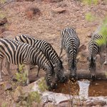 Waterhole at the lodge