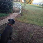 Our Dane, Luna, watching the sunrise from the Huntbox Cottage
