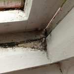 more rotten window frames in the bathroom