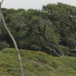 Fort Fisher State Recreation Area Foto