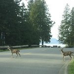 We were greeted by a mother and two fawns as we entered Washington Park