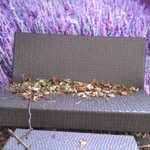 Autumnal leaves on the garden furniture.
