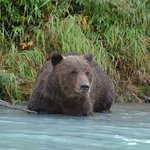 fly in fishing and bear watching trip