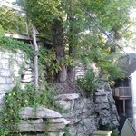 tree from stone wall