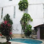 plants and vines by pool