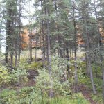 Bilde fra Denali Grizzly Bear Cabins & Campground