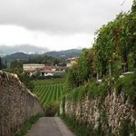 the walk through vineyards to the local restaurant