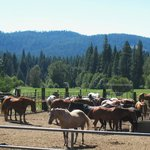 Greenhorn Creek Guest Ranch resmi