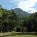 Park with Mt Warning in the background