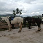 Horseback Riding - a must in Dingle!