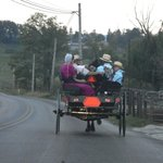 Amish buggy on the road