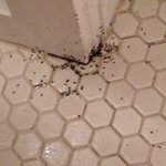 Ants infestation!!!  Yuck
