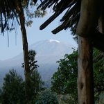 Kili from the Lodge