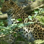 Фотография Kulu Safaris Sri Lanka