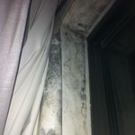 Black mold, peeled wallpaper and water damage around window