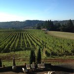 Foto de Black Walnut Inn & Vineyard