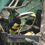 Tucan - View from the breakfast area