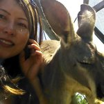 Close encounter with a kangaroo