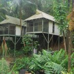 Foto de Daintree Eco Lodge & Spa