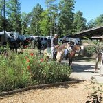 Timberridge Horse Campgroundの写真