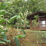 Photo of Heliconias Lodge
