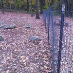 rocky dog park with rickety fence