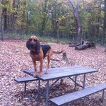 our dog in dog park, see tree stumps and large rocks covered with leaves - hazardous for running