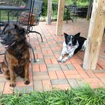 Our dog hanging out with Max (black and white one) that lives on the property