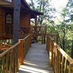 Treehouse Cottages의 사진