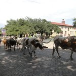 Bild från Hyatt Place Ft. Worth Historic Stockyards