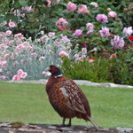 A visitor to the garden