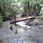 Photo of Termales del Bosque