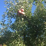 Foto de Apple Country Bed and Breakfast