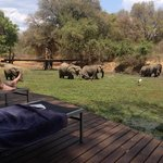 Watching the elephants by the pool